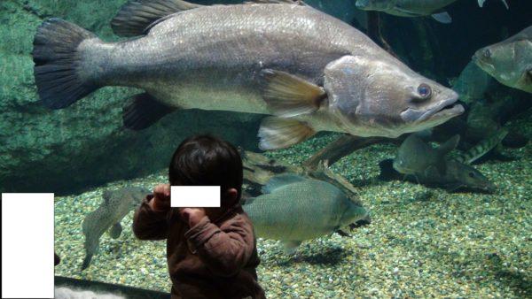 大きな魚にビックリ